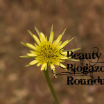 Beauty Blogazon Round Up!