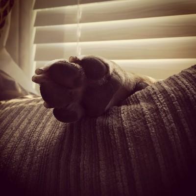 Adopt a Bully. #bullterrier #dogsofinstagram #bullybreed #aspca #fureverhome #girlsbestfriend