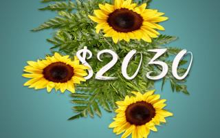 June 2015 Debt Pay Off AmountFI