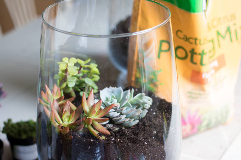 Creating a Succulent Garden in a Vase (8 of 12)